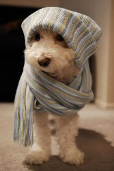 dog-cold-weather-med