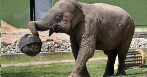 elephant & toy