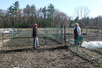 CG-2-Community garden 4-12-20 7
